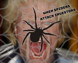 Palm Beach Land Spider Attack