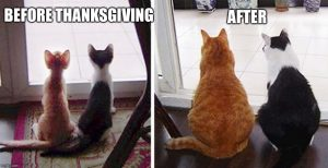 Funny Thanksgiving Memes 2019 #2