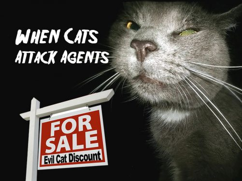 Cat attack real estate agent