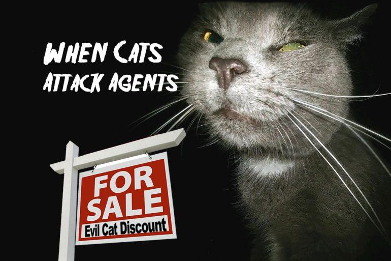 Cat attack real estate agent