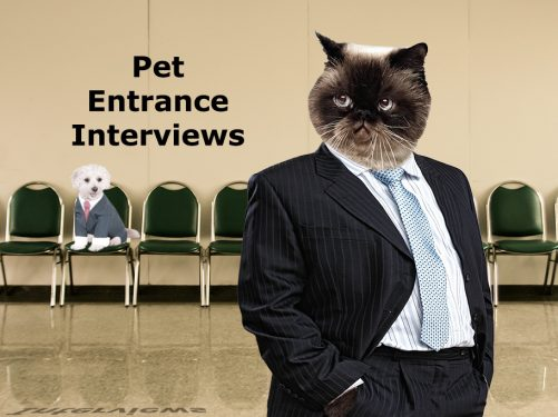 Pet Entrance interviews