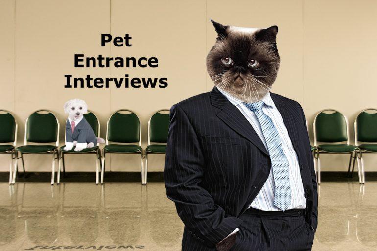 Pet Entrance interviews