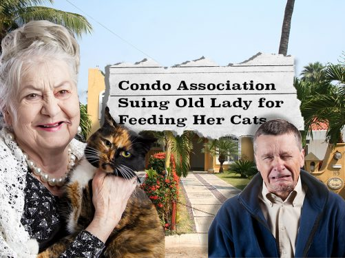 Condo board suing Florida woman over feeding of stray cat